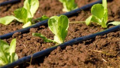 Irrigazione, entro febbraio la consegna delle fatture