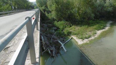 Ponti sul Metauro: il Consorzio è all'opera per rimuovere i pericolosi tronchi che ostruiscono il deflusso delle acque a Cerbara e a Saltara.