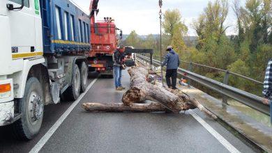 Rimossi grossi tronchi che ostruivano le campate del Ponte sul fiume Metauro, tra Calcinelli e Villanova