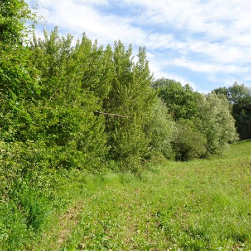 Messo in sicurezza e ripulito dalla vegetazione un tratto dell'Esino 1799 nel Comune di Mergo.